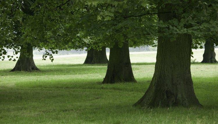 Trees are metaphors.