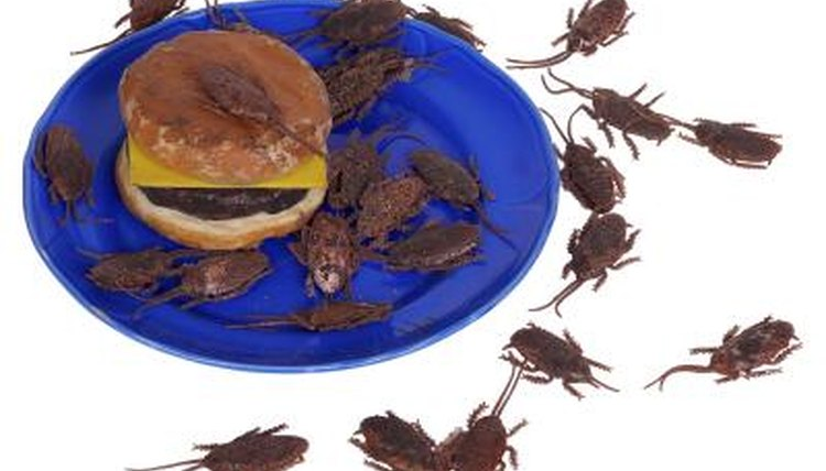 What Foods Most Attract Roaches | Animals - mom me