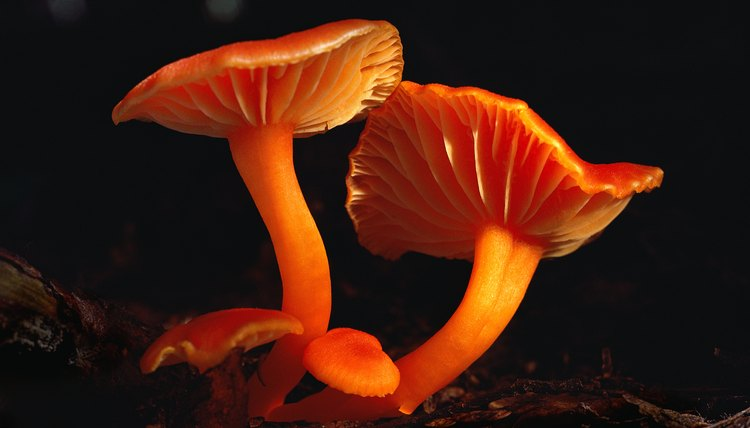 Fungi decompose dead matter, releasing nutrients back into the food chain.
