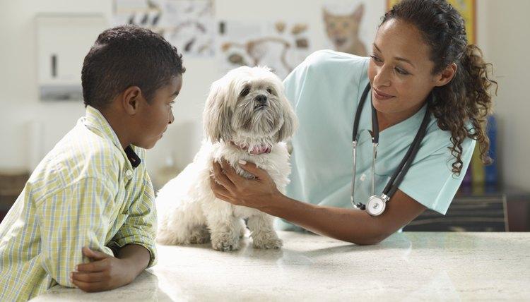 Nice Dog At The Veterinarian
