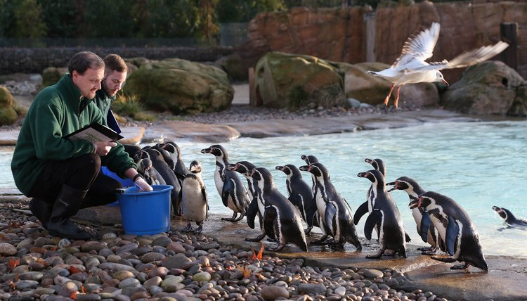 London Zoo's Annual Animal Stocktake