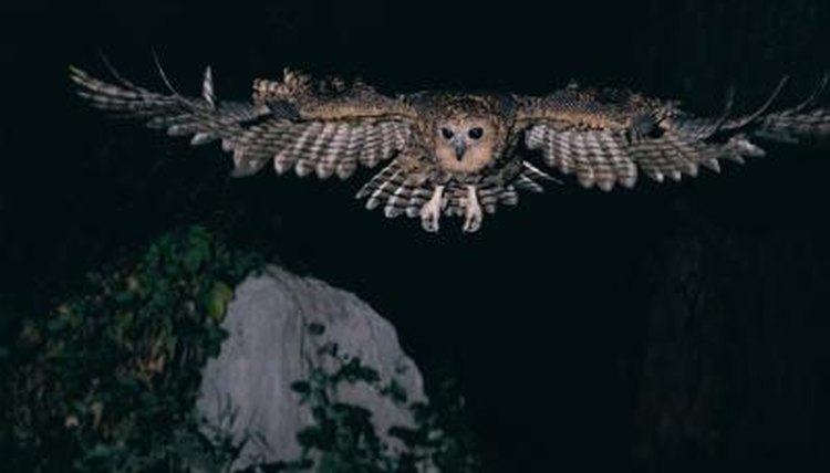 Image of: Barn Owl Stockbytestockbytegetty Images Animals Momme Why Do Nocturnal Animals Have Large Pupils Animals Momme