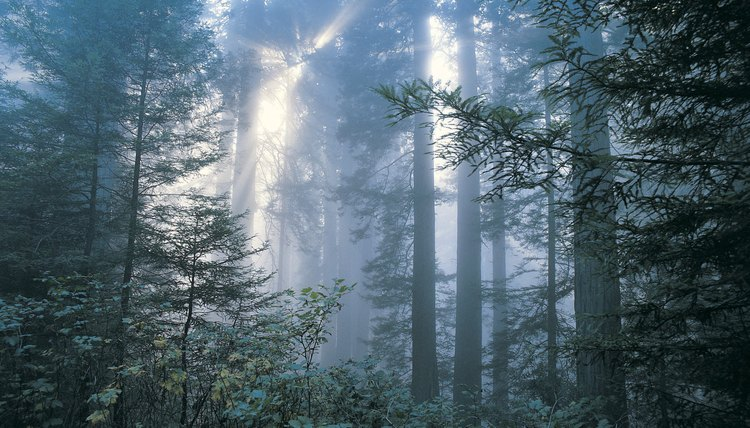 Temperate deciduous forests play an important environmental role, but face many problems