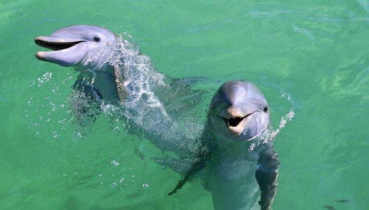 Coastal schools are ideal for observing marine mammals.