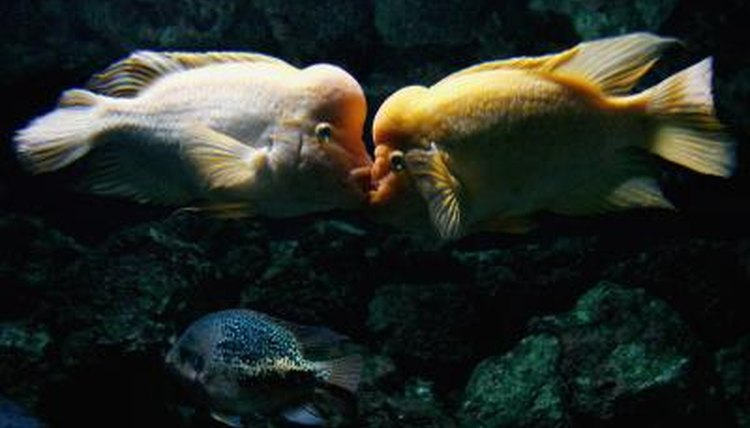Fish That Are Compatible With Blood Parrots | Animals - mom me