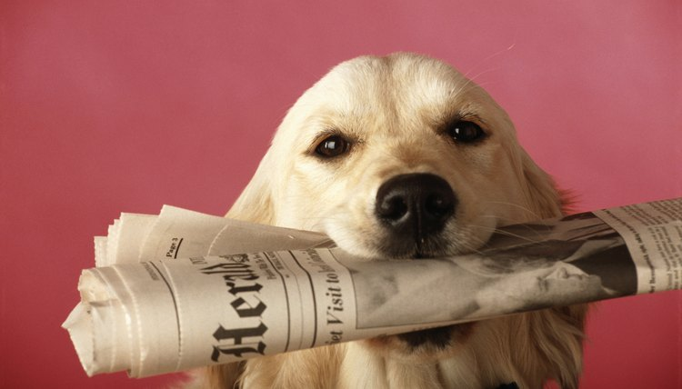 DailyPuppy article image
