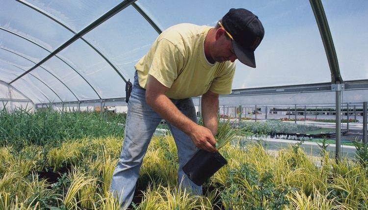 Job Description of a Greenhouse Worker | Career Trend