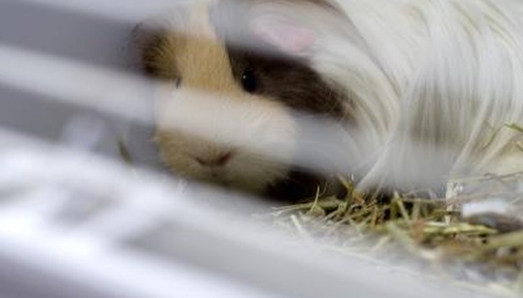 Types of Guinea Pig Cages | Animals - mom me