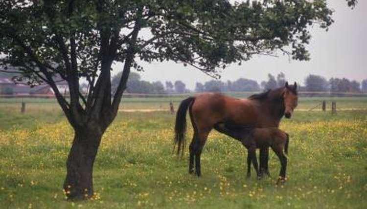 The Horse Mating Process Animals