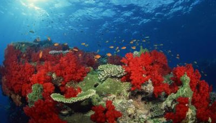 Why are Corals Bright Colors? | Animals - mom.me