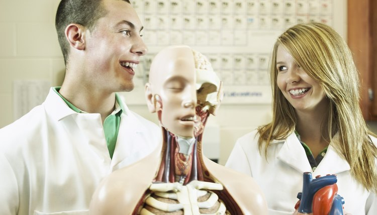 Many educational programs and classes require learning the human skeleton.