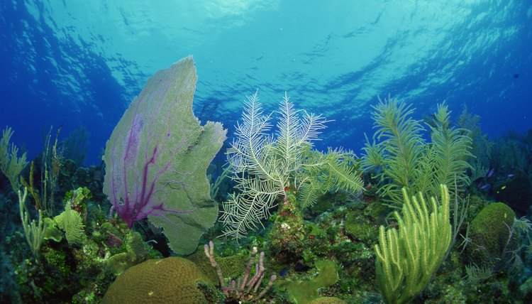 Researching the biodiversity among marine plant life can help determine why some animal species struggle to survive.