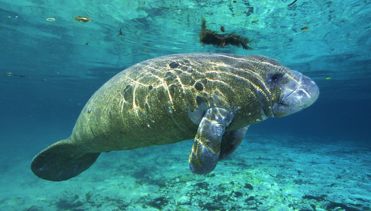 Aquariums hire biology majors to work with marine animals.
