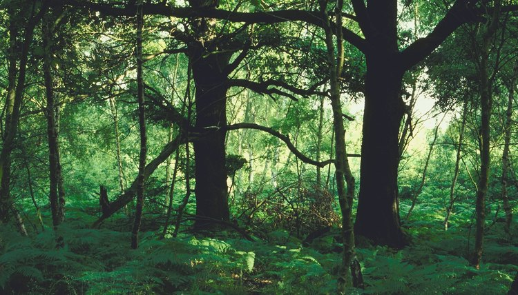 The forest ecosystem contains many smaller habitats.
