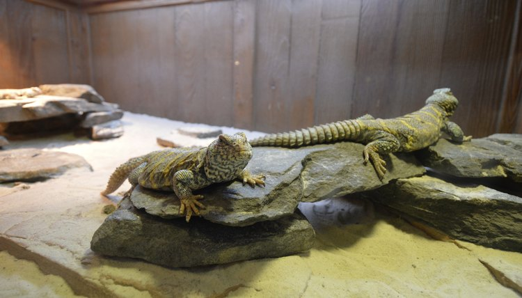 How To Build Your Own Reptile Cage Animals Mom Me