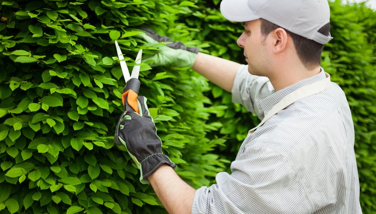 A gardener trims a shrub.