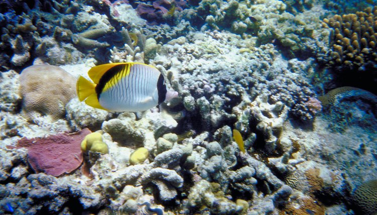 The Great Barrier Reef is home to many species of animals.
