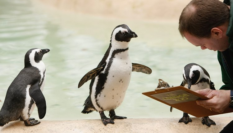 London Zoo Holds Its Annual Animal Stocktake