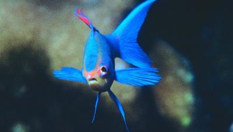 Will a Fish's Tail & Fin Regrow?   Animals - mom me