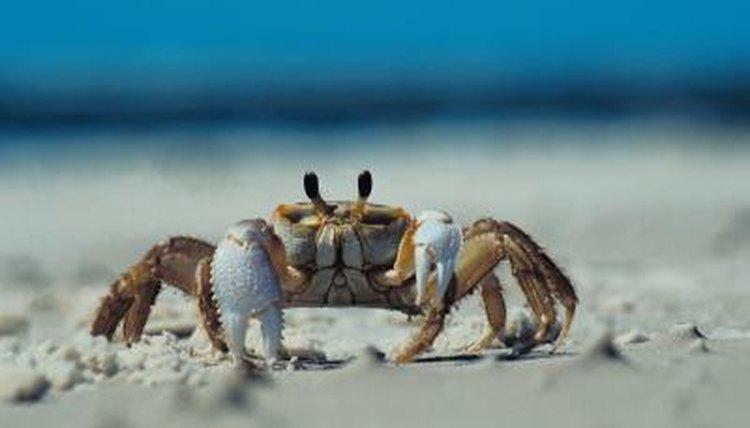 Habitat Of The Land Crab