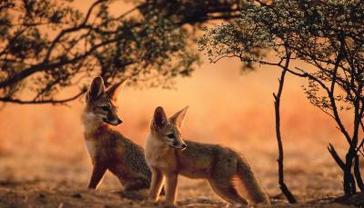Types Of Wild Dogs With Pictures