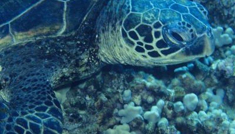 Molting in Aquatic Turtles | Animals - mom me