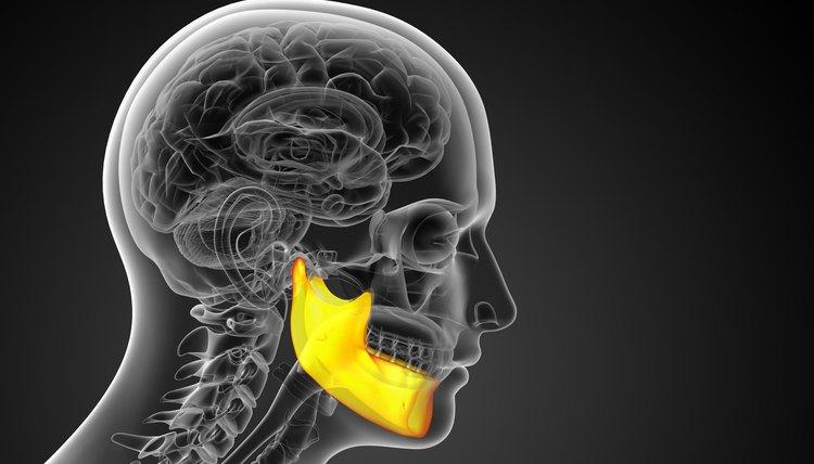 Bones in the Jaw