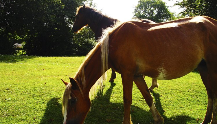 Lymph swelling on the belly in horses animals mom zjakeistockgetty images ccuart Choice Image