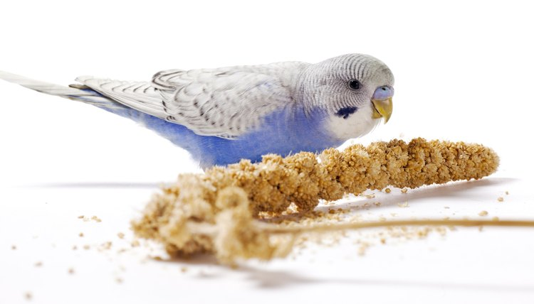 What Is a Millet Spray? | Animals - mom me
