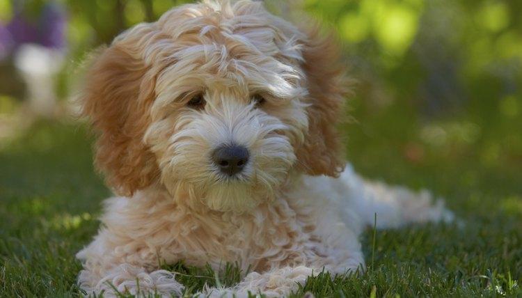 puppy lying on grass