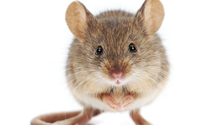 What Do Mice Hate? | Animals - mom.me