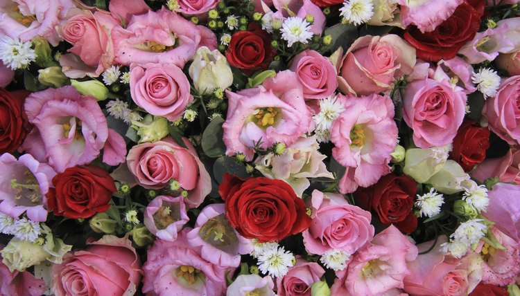 Assortment of pink and red flowers