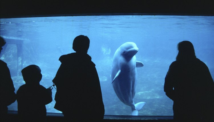Visitors at a marine park gaze into a whale exhibit.
