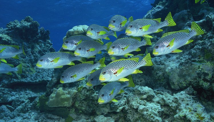 Australia's Great Barrier Reef is home to a tremendous abundance and diversity of life.