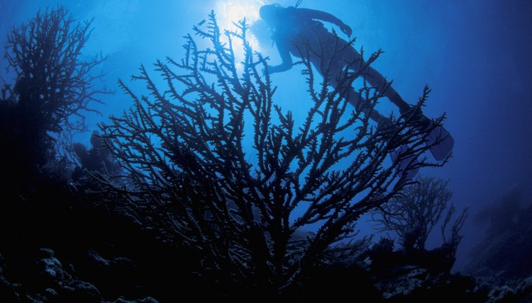 silhouette of a coral formation with a scuba diver above it