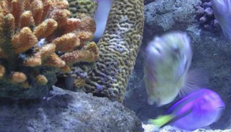 how to remove high nitrates in aquarium water animals mom me