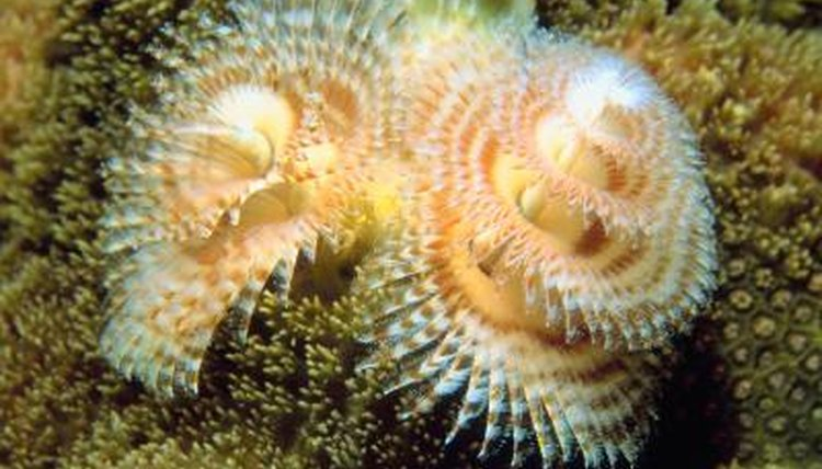 Interesting Facts On Christmas Tree Worms Animals Mom Me