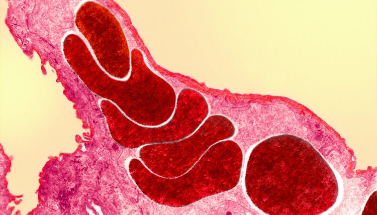 In mammals and birds, oxygen crosses the blood-air barrier in the lungs.
