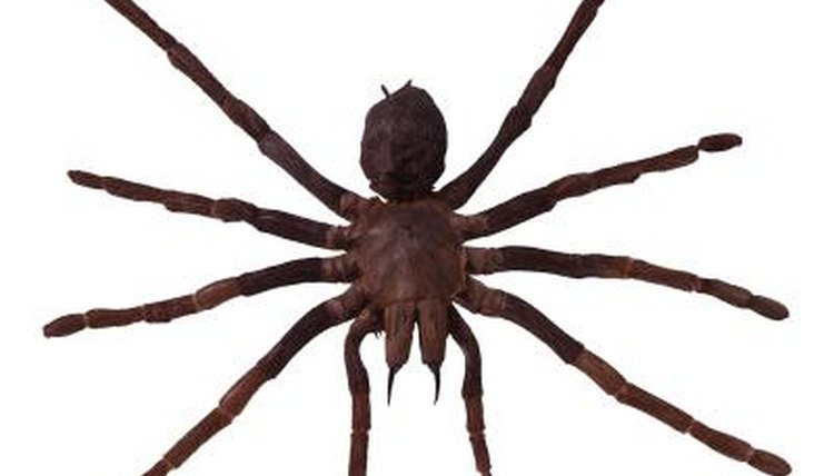 What Kind of Arachnids Carry Their Young? | Animals - mom me
