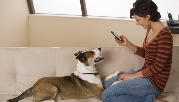 dog breeder receiving phone call