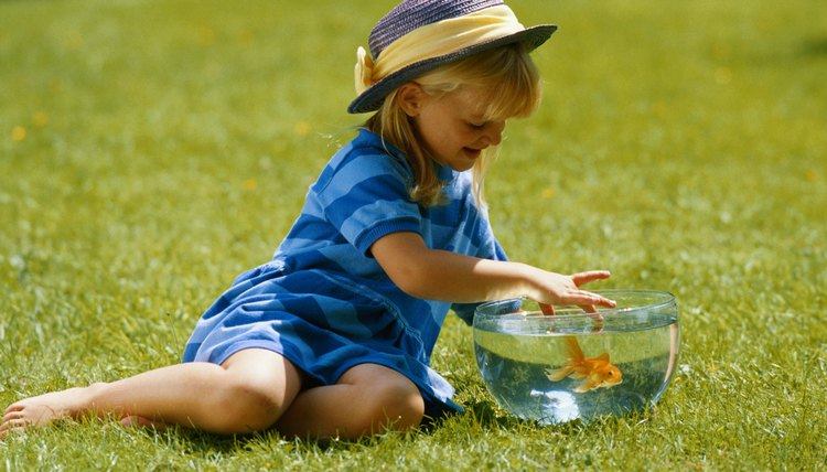 Goldfish allow for up-close learning.