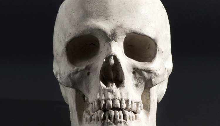 Skulls are categorized based on dimension, shape and physical characteristics.