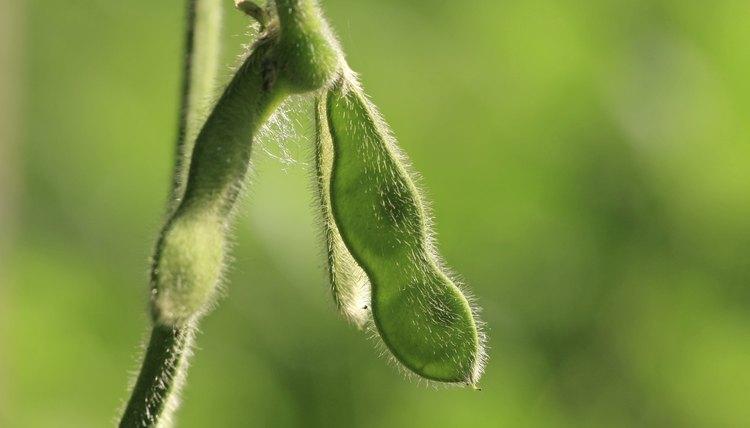 beans folder
