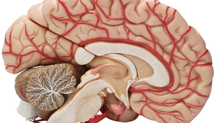 The field of neuroscience helps to advance the understanding of the brain and nervous system.