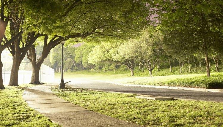Landscape architects design city parks.