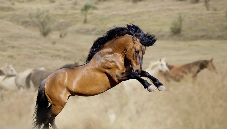 Wild Horses' Mating Habits | Animals - mom me