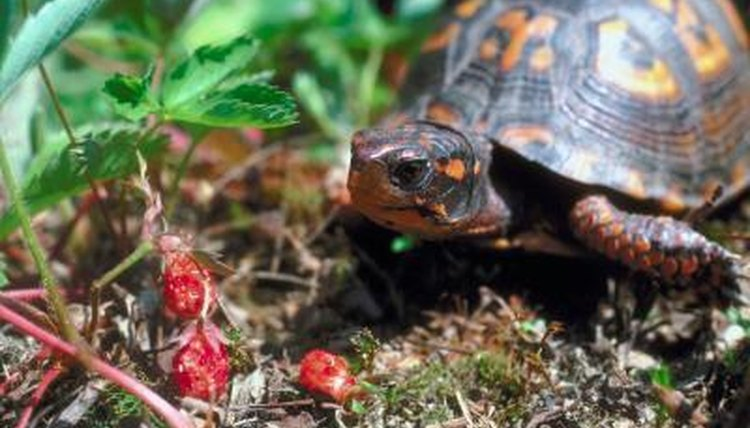 How to Prevent Odors From Turtles | Animals - mom me