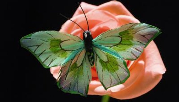 are butterflies attracted to color animals mom me