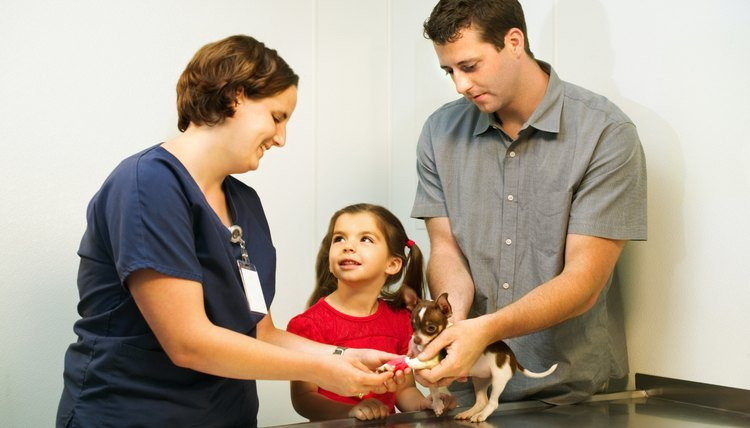 Bring her on your pet's next vet check to see how veterinary medicine works.