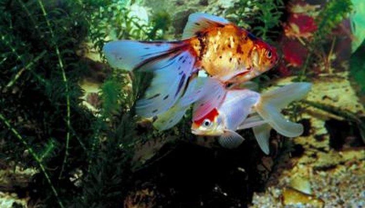 how to eliminate aquarium filter noises animals mom me